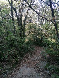 Les chemins en forêt