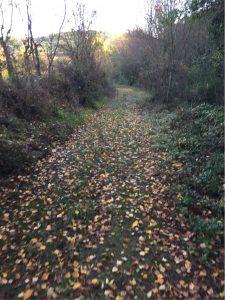 Chemins de promenades