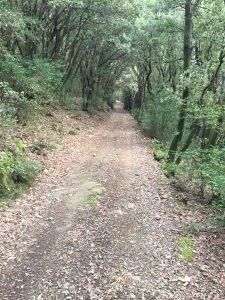 Chemins en sous bois